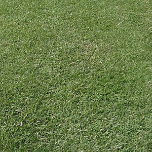 Close up view of the excellent density and texture of Arden 15 Hybrid Bermuda Grass Seed.