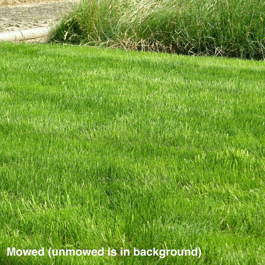 California Native All Purpose Grass Mixture - Mowed. Unmowed is in the background.