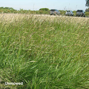 California Native All Purpose Grass Mixture - Unmowed.
