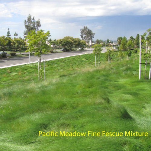 Pacific Meadow Fine Fescue Mixture in a landscape / park setting.