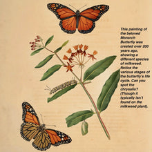 Load image into Gallery viewer, Painting of Monarch Butterflies and milkweed from 1797.