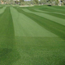 Load image into Gallery viewer, PANGEA GLR / Turf-Type Perennial Ryegrass / Platinum Quality™ (Cool Season Zones 1-5)