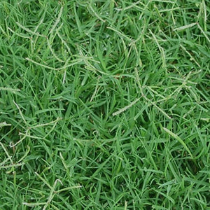 ROYAL TXD Improved Bermuda Grass Seed Blend (Warm Season Zones 3-5)