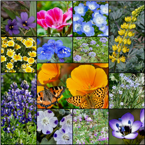 Gorgeous composite photo of most of the flowers found in Stover's colorful California Native Wildflower Mixture.