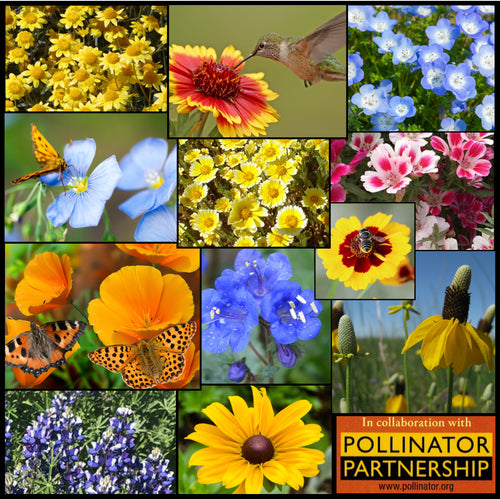 Colorful composite photo of Stover Seed's California Pollinator Wildflower Mixture that we developed with The Pollinator Partnership.