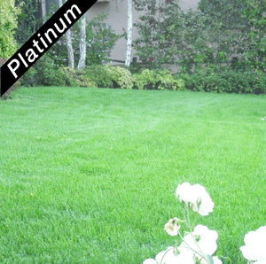 Beautiful lawn grown from Grand Slam turf-type, perennial ryegrass blend, Platinum Quality grass seed.