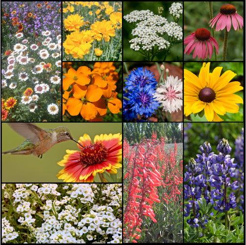 Photo collage of beautiful wildflowers in Stover Seeds' Hummingbird and Butterfly Wildflower Mixture.