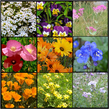 Load image into Gallery viewer, Vibrant colors in our low growing Lo Gro Wildflower Mixture  that doesn't get too tall!