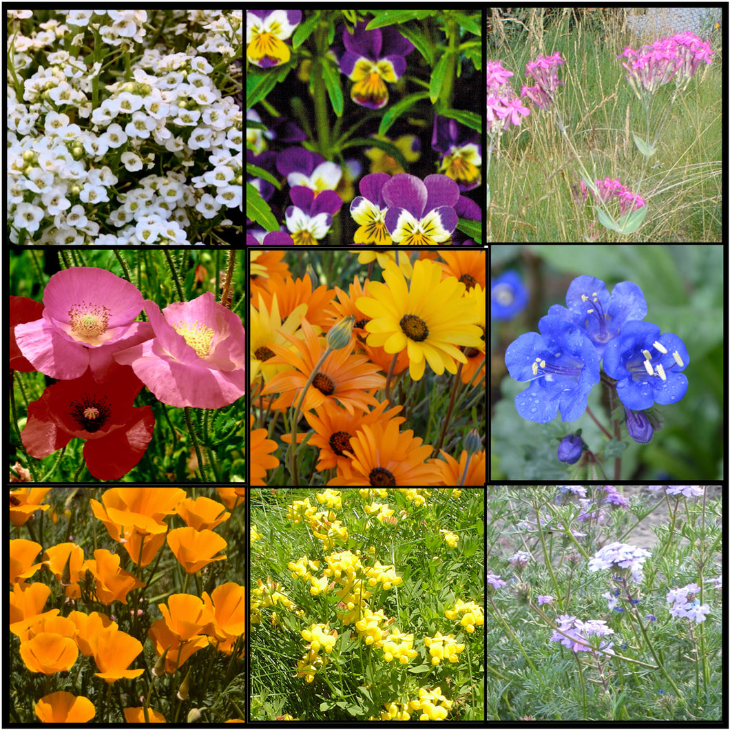 Vibrant colors in our low growing Lo Gro Wildflower Mixture  that doesn't get too tall!