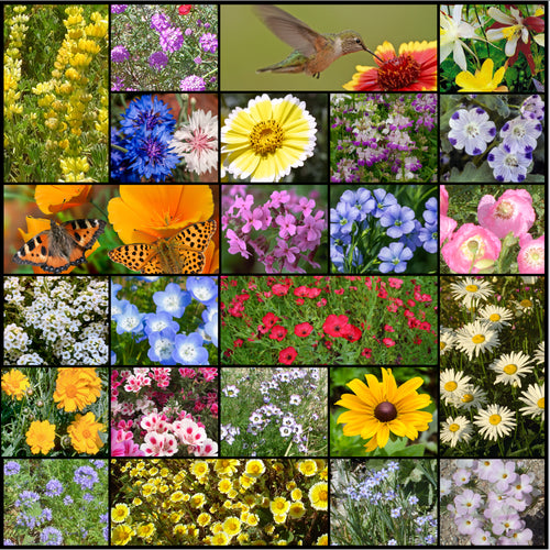 Northwest Wildflower Mixture composite photo of the 24 varieties.