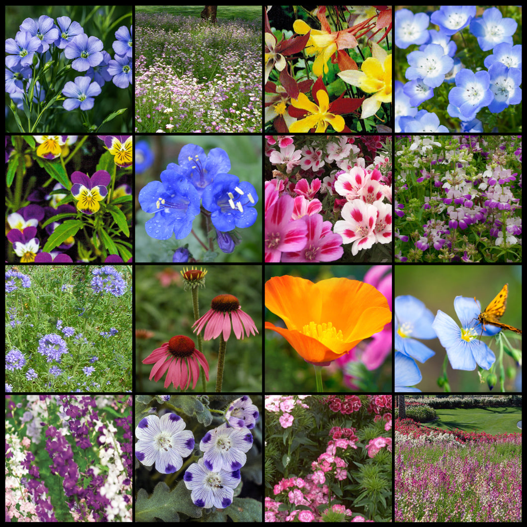 Composite photo of the many colorful flowers in Part Shade Wildflower Seed Mixture.