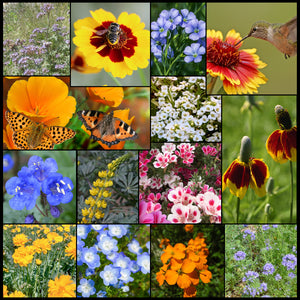 Composite photo of Pollinator Wildflower Mixture showing the various flowers and some pollinators they attract.