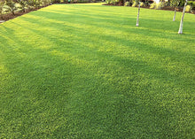 Load image into Gallery viewer, Photo of Pure Dynasty Seashore Paspalum used in a home lawn setting
