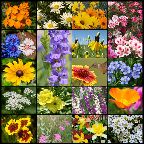 Composite photo of all 18 glorious flowers in our Rocky Mountain Wildflower Seed Mixture.