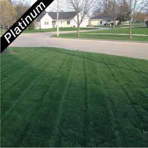 Deep green home lawn, grown from Royal Blue Kentucky bluegrass blend, Platinum Quality lawn seed.