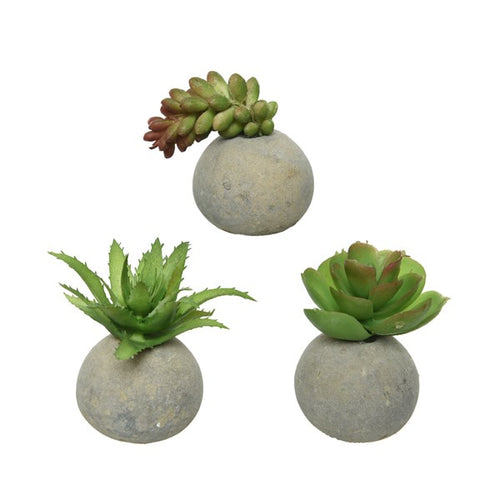 Mini Succulent in Concrete Pot - Various Styles - Derbyshire Gift Centre