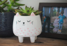 Load image into Gallery viewer, Ceramic Cat Pot - Derbyshire Gift Centre