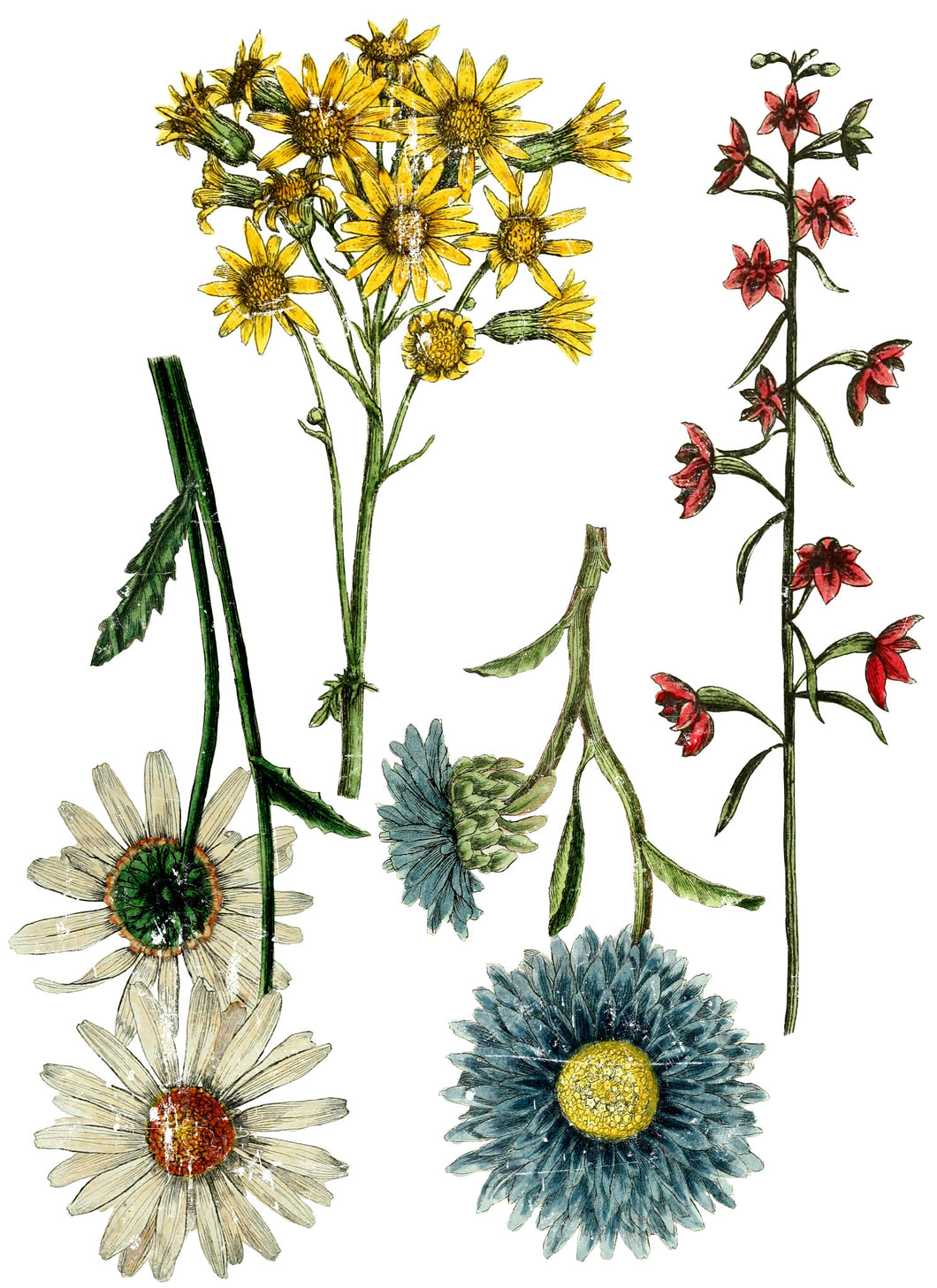 Wild Flower Botanical - Transfer