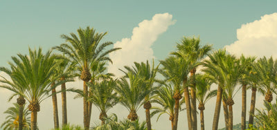 Jeroen Knippenberg 'Palm Trees and Clouds'
