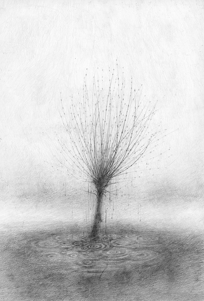 Linde Faas 'Weeping Willow'