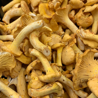 Fresh UK Girolle Mushrooms - 200g