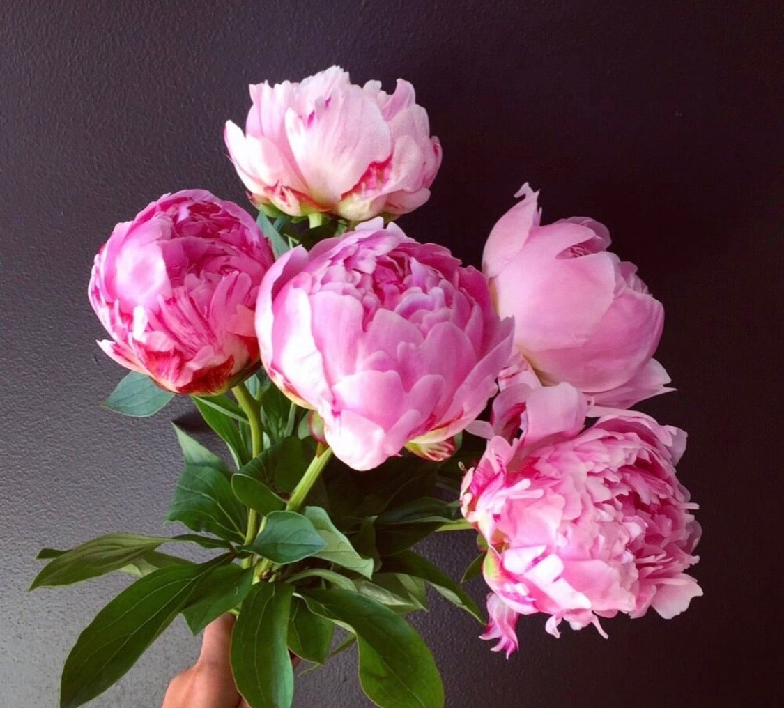 *Special* Peonies