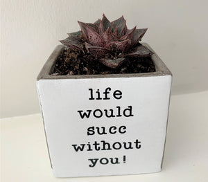 Life Would Succ Planter