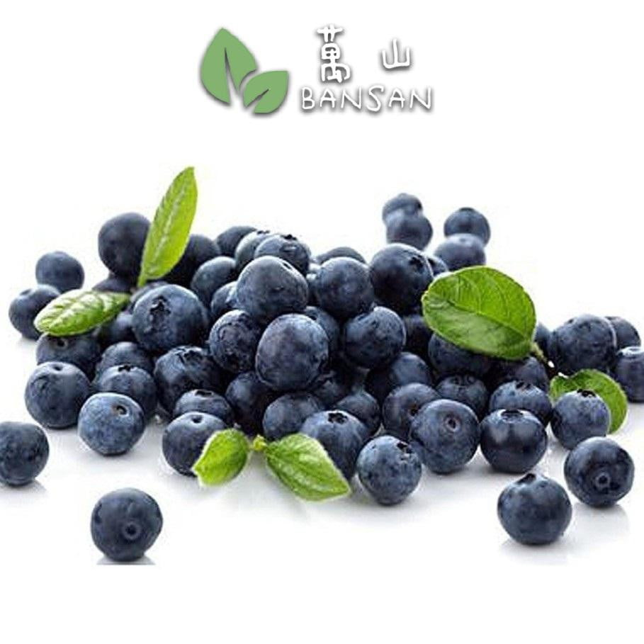 Penang Grocery Store Online Next Day Delivery is Offering Blueberry 蓝莓 (±125g)