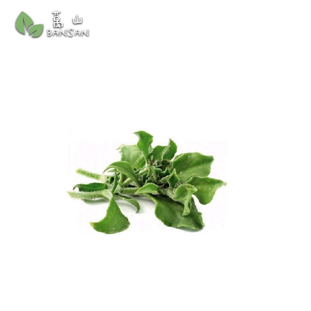 Penang Grocery Store Online Next Day Delivery is Offering Ice Plants 冰菜 (1 box)