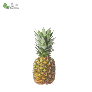 Penang Grocery Store Online Next Day Delivery is Offering Premium Pineapple  (+/-1.5kg)