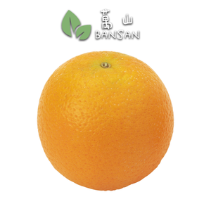 EGYPT Valencia Orange 埃及水橙 (8 Pcs) - Bansan Penang