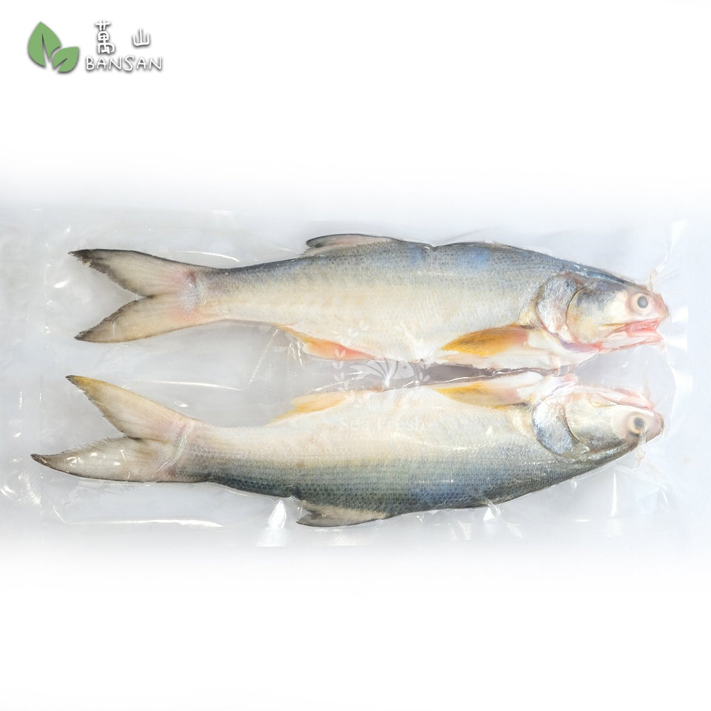 Threadfin (Ma Yau) 马友鱼 (+/-1kg) - Bansan Penang