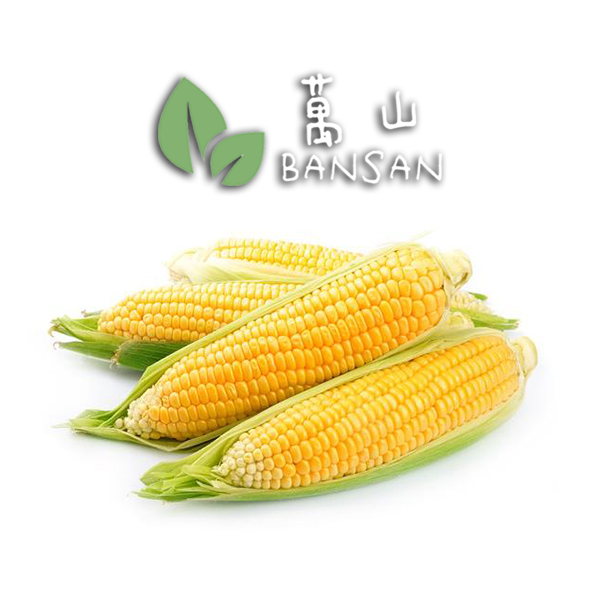 Penang Grocery Store Online Next Day Delivery is Offering Corn 玉米 (1 Pc)