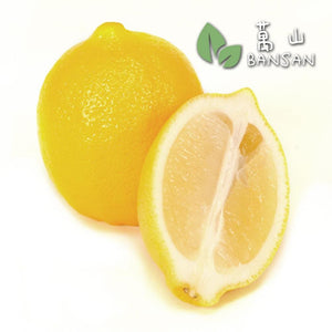 Penang Grocery Store Online Next Day Delivery is Offering Lemon 柠檬 (1 Pc)