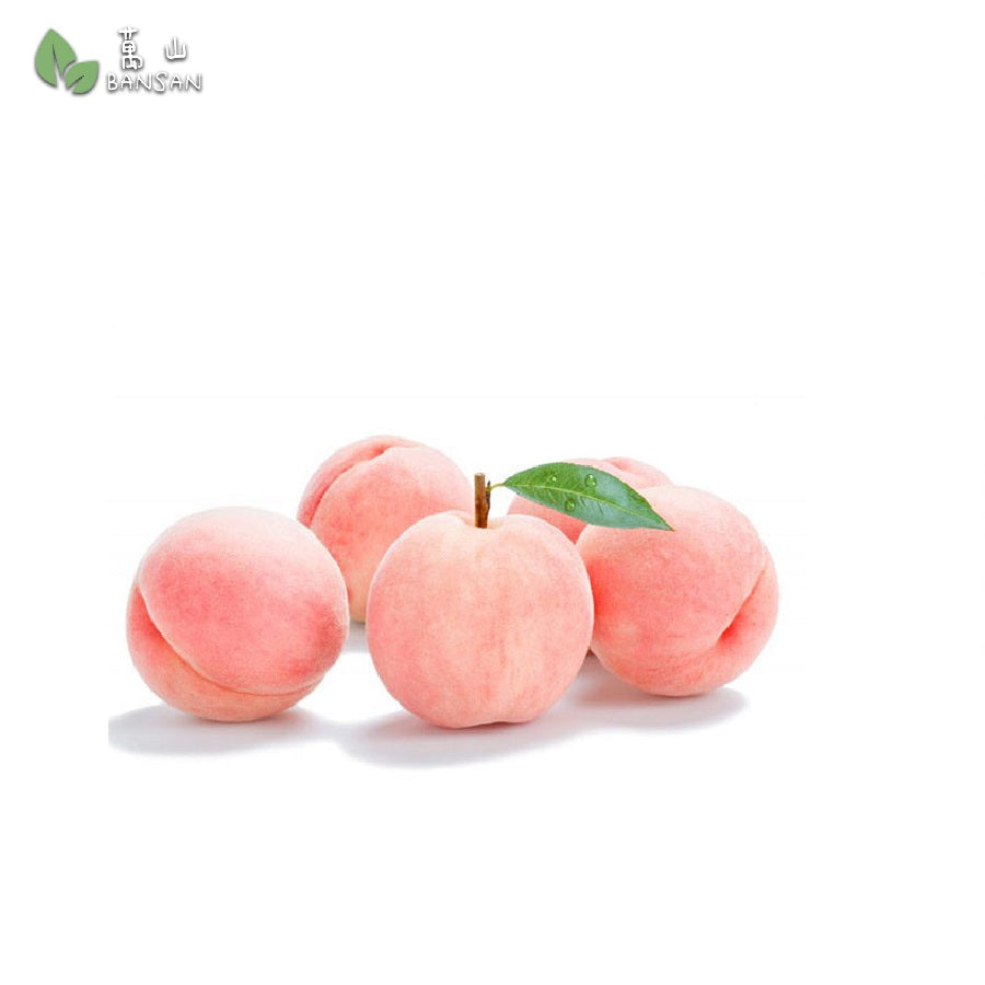 Penang Grocery Store Online Next Day Delivery is Offering Korean Premium Peach (2 pieces)