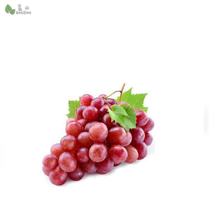 Penang Grocery Store Online Next Day Delivery is Offering Australia Red Globe 红葡萄 (Seed) (500g+/-)