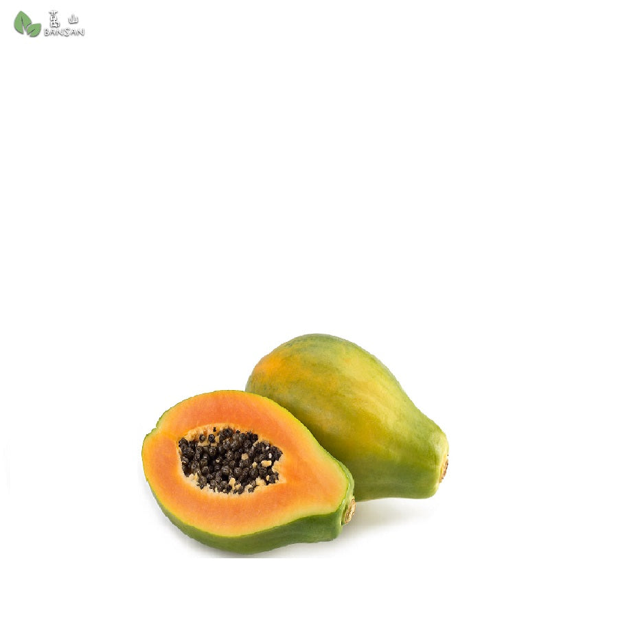 Penang Grocery Store Online Next Day Delivery is Offering Solo Papaya (Philippine) 外国木瓜 (1pcs) (0.47g+/-) per unit