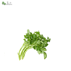 Penang Grocery Store Online Next Day Delivery is Offering Watercress 西洋菜 (500g)