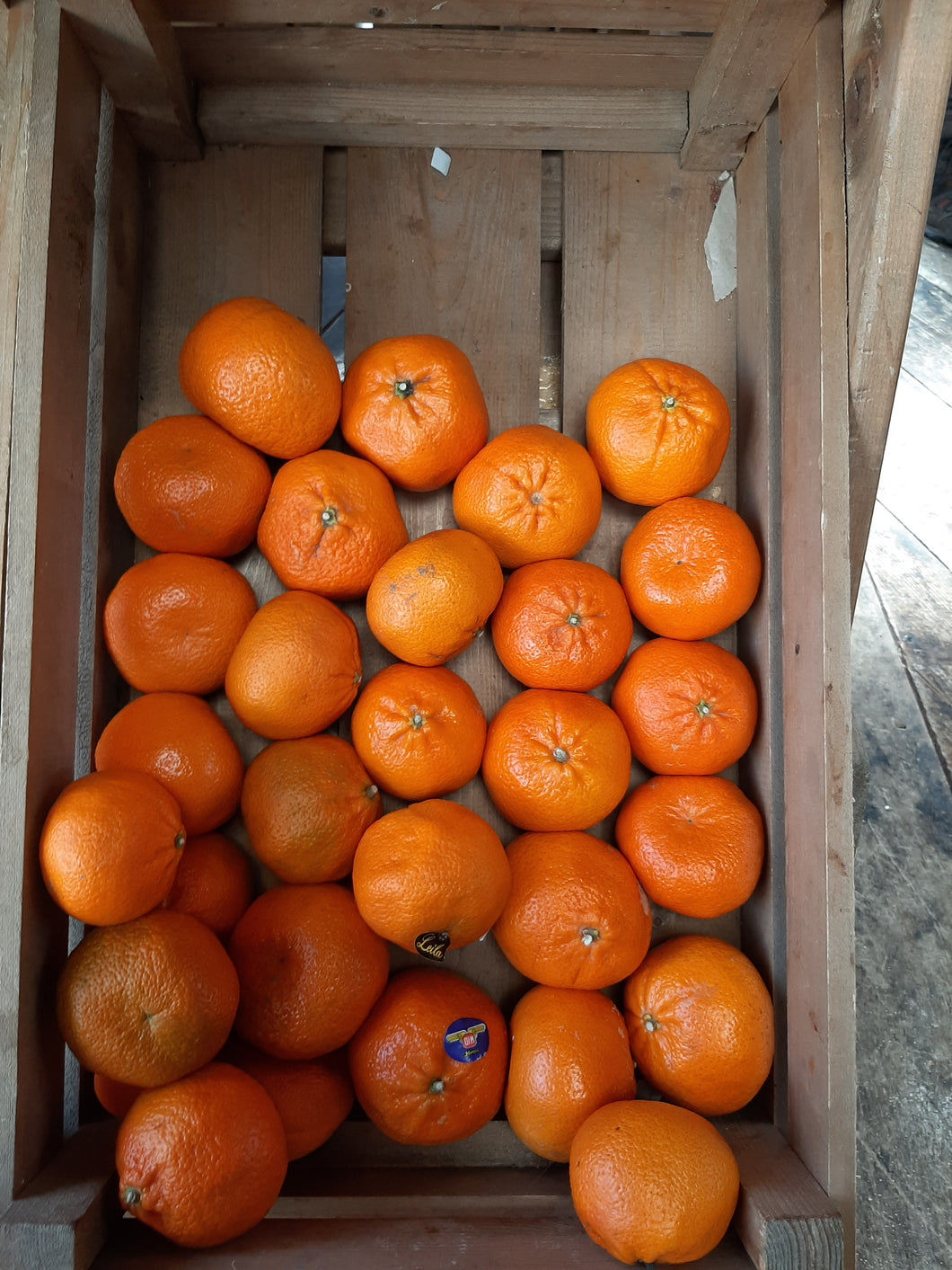 Satsuma /s available as Singles or x3