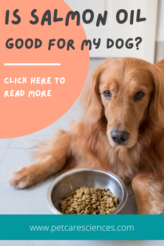 is salmon oil good for dogs?