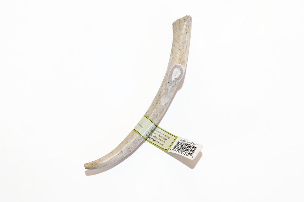 Deer Antler Giant Dog Chew