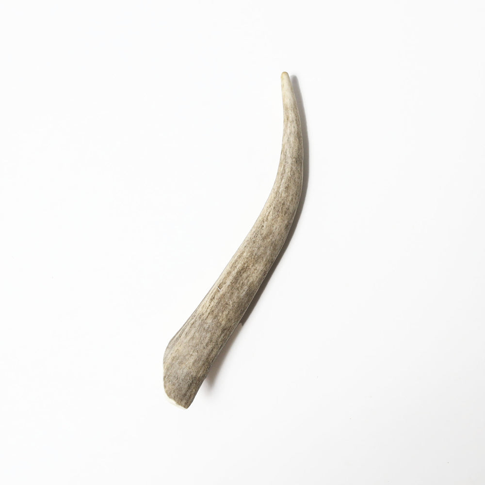 Deer Antler Regular Dog Chew