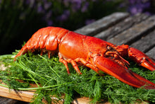 Load image into Gallery viewer, Whole Cooked Lobster