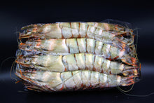 Load image into Gallery viewer, Whole Wild Prawns - XXL