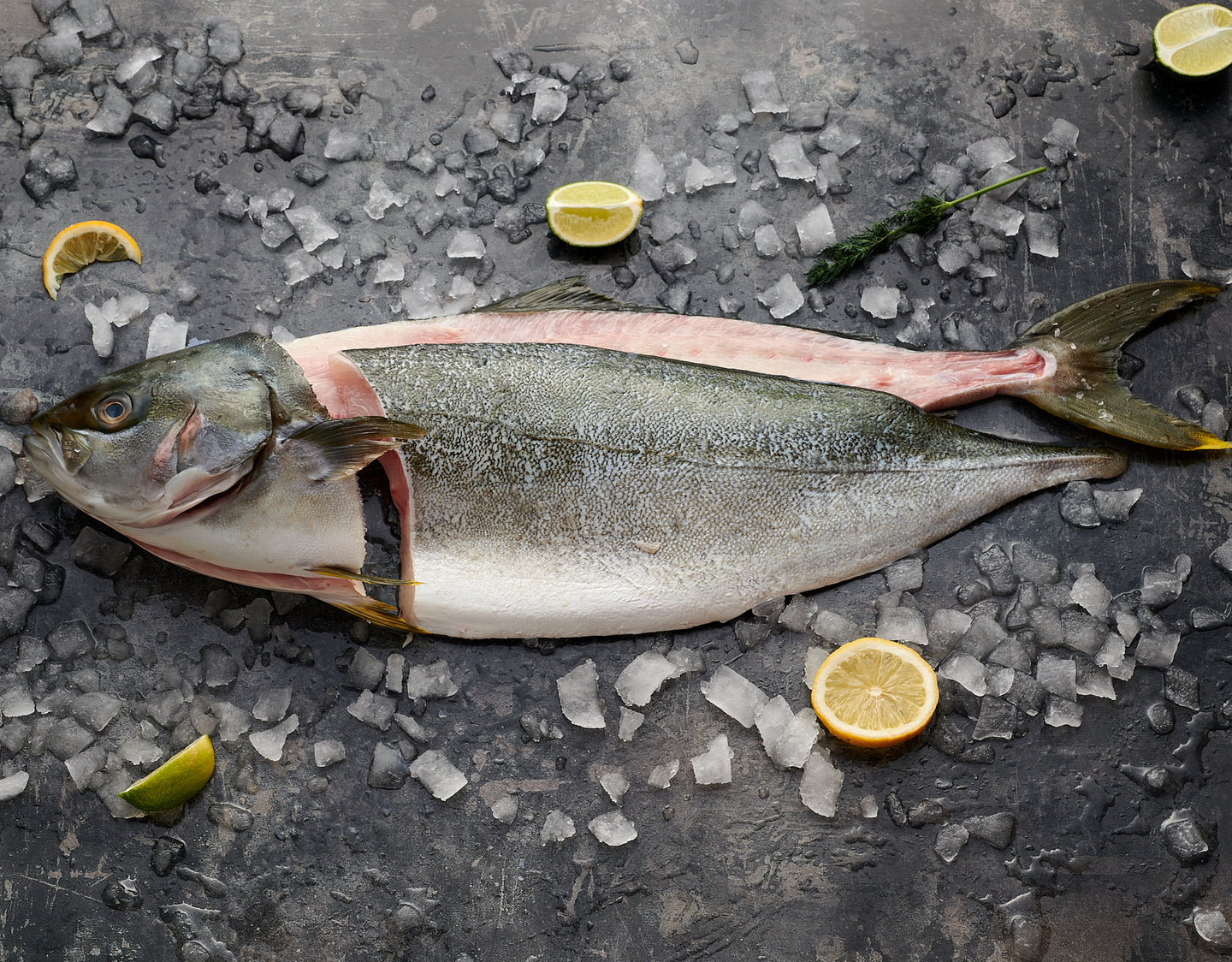 Whole Zeeland Yellowtail Kingfish