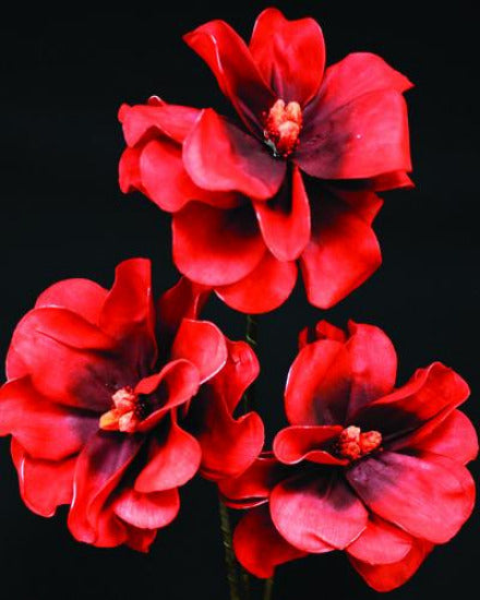Red Blooms Flower 120