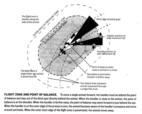 Flight Zone and Point of Balance