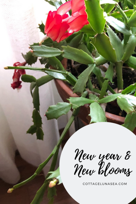 New Year, New Blooms