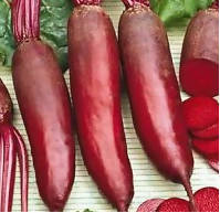 betteraves cylindriques l Cylindrical Beets