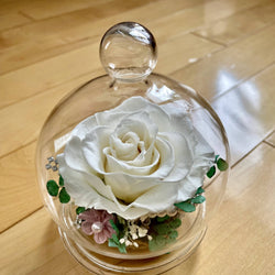 "Eternal Roses in Glass Dome - white - 3""x5.5""/ M"
